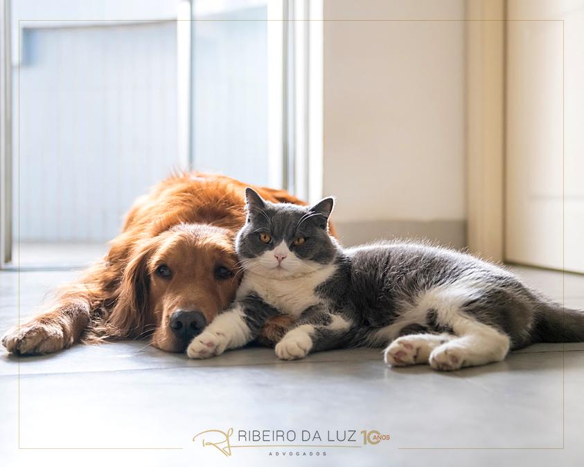 STJ libera animais de estimação em condomínios